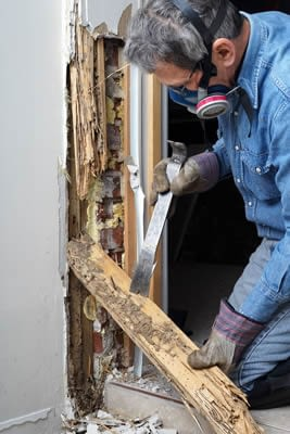 Termites In Building